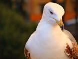 My Bird Obseesion