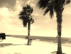 Palma's Palm Tress